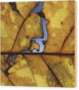 Close Up Of Yellow Leaf Wood Print