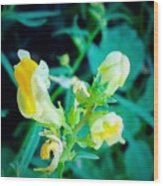 Close Up Of Yellow Wild Flowers Wood Print