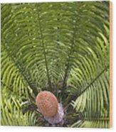 Close-up Palm Leaves Wood Print