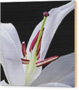 Close-up Photograph Of A White Oriental  Lily Wood Print