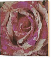 Close Up Pink Red Rose Wood Print