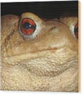 Close Up Portrait Of A Common Toad Wood Print