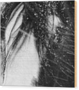Close Up Portrait Of A Horse In Falling Snow Wood Print
