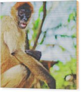 Close-up Portrait Of A Nicaraguan Spider Monkey Sitting And Looking At The Camera Wood Print