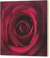 Close Up Red Roses Flowers Art Work Photography Wood Print