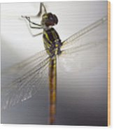 Close Up Shoot Of A Anisoptera Dragonfly Wood Print