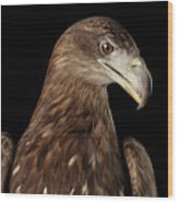 Close-up White-tailed Eagle, Birds Of Prey Isolated On Black Bac Wood Print