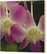 Close View Of A Pink Orchid Flowers Wood Print