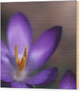 Close View Of A Purple African Violet Wood Print