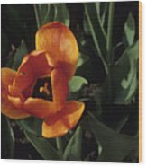 Close View Of A Tulip Wood Print