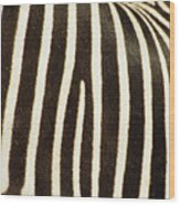 Close View Of A Zebras Stripes Wood Print by Stacy Gold