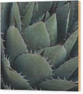 Close View Of An Agave Plant Wood Print