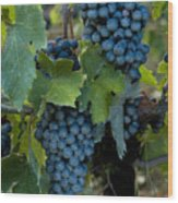 Close View Of Chianti Grapes Growing Wood Print