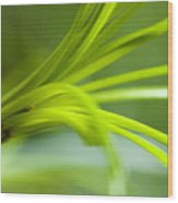 Close View Of Green Flower Wood Print