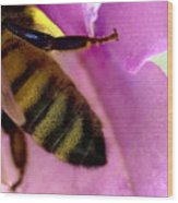 Close View Of Single Honey Bee Wood Print