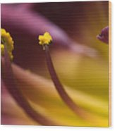 Close View Of Stamen Of A Flower Wood Print