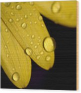 Close View Of Water Drops On The Petals Wood Print