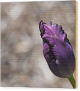 Closed Purple Tulip  Wood Print
