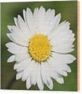 Closeup Of A Beautiful Yellow And White Daisy Flower Wood Print