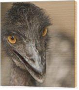 Closeup Of A Captive Emu Wood Print