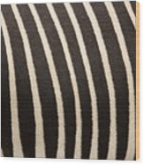 Closeup Of A Grevys Zebras Coat Equus Wood Print