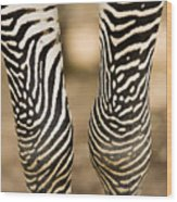 Closeup Of A Grevys Zebras Legs Equus Wood Print