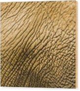 Closeup Of An African Elephant Wood Print