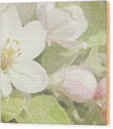 Closeup Of Apple Blossoms In Early Wood Print