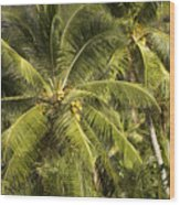 Closeup Of Coconut Palm Trees Wood Print