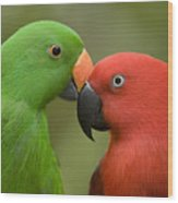Closeup Of Male And Female Eclectus Wood Print