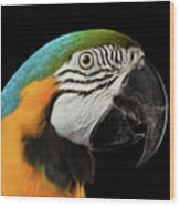 Closeup Portrait Of A Blue And Yellow Macaw Parrot Face Isolated On Black Background Wood Print