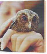 Closeup Portrait Of A Girl Holding And Tending A Small Baby Owl In Her Hands Wood Print