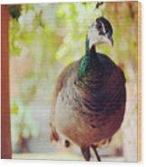 Closeup Portrait Of A Peafowl Wood Print