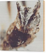 Closeup Portrait Of A Young Owl Looking At The Camera Wood Print