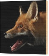 Closeup Portrait Of Red Fox In Profile Isolated On Black  Wood Print