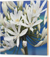 Closeup White Californian Flower Wood Print