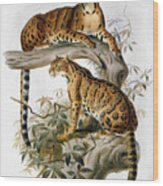 Clouded Leopard, 1883 Wood Print
