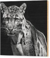 Clouded Leopard Wood Print