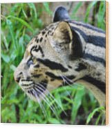 Clouded Leopard In The Grass Wood Print