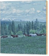 Clouds And Horses Wood Print