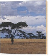 Clouds Over The Masai Mara Wood Print