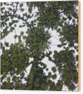 Cloudy Skies Through Maple Wood Print