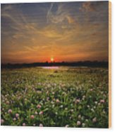 Clover Field Wood Print
