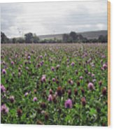 Clover Field Wiltshire England Wood Print