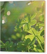 Clover Leaf In Garden, Macro Wood Print