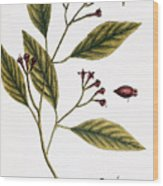 Cloves, 1735 Wood Print