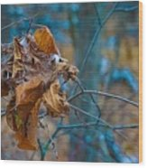 Clump Of Fall - Early Winter Wood Print