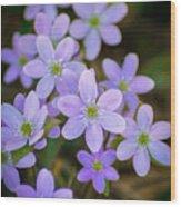 Clump Of Springtime Wood Print