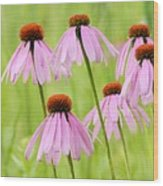 Cluster Of Cone Flowers Wood Print