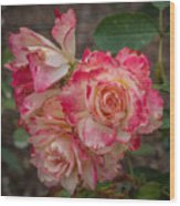 Cluster Of Roses Wood Print